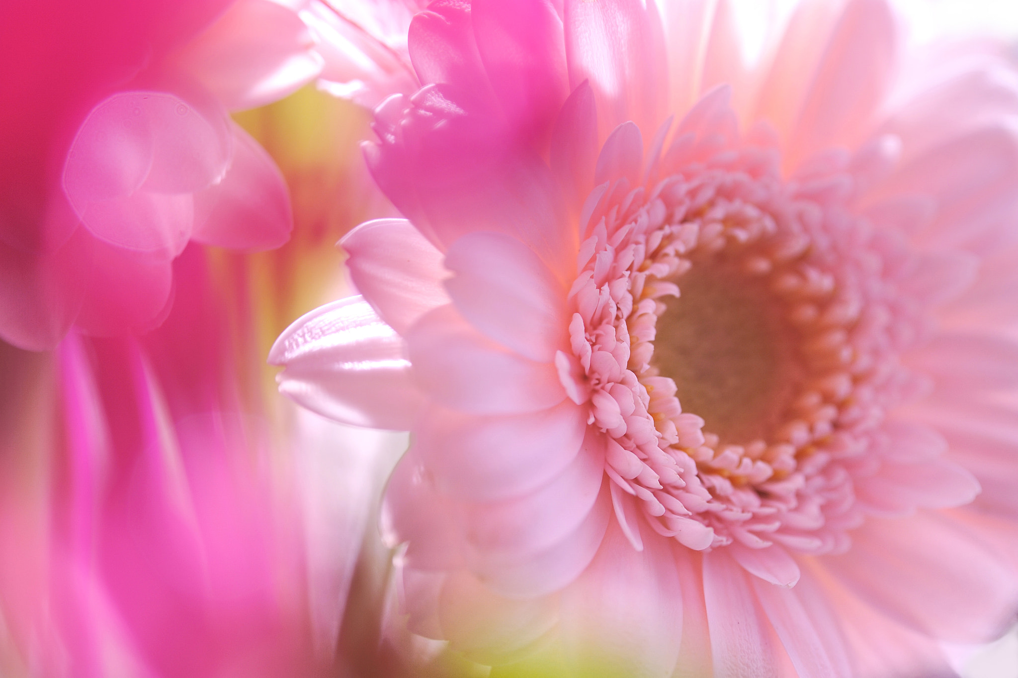 Photograph Floral hour by Lafugue Logos   on 500px