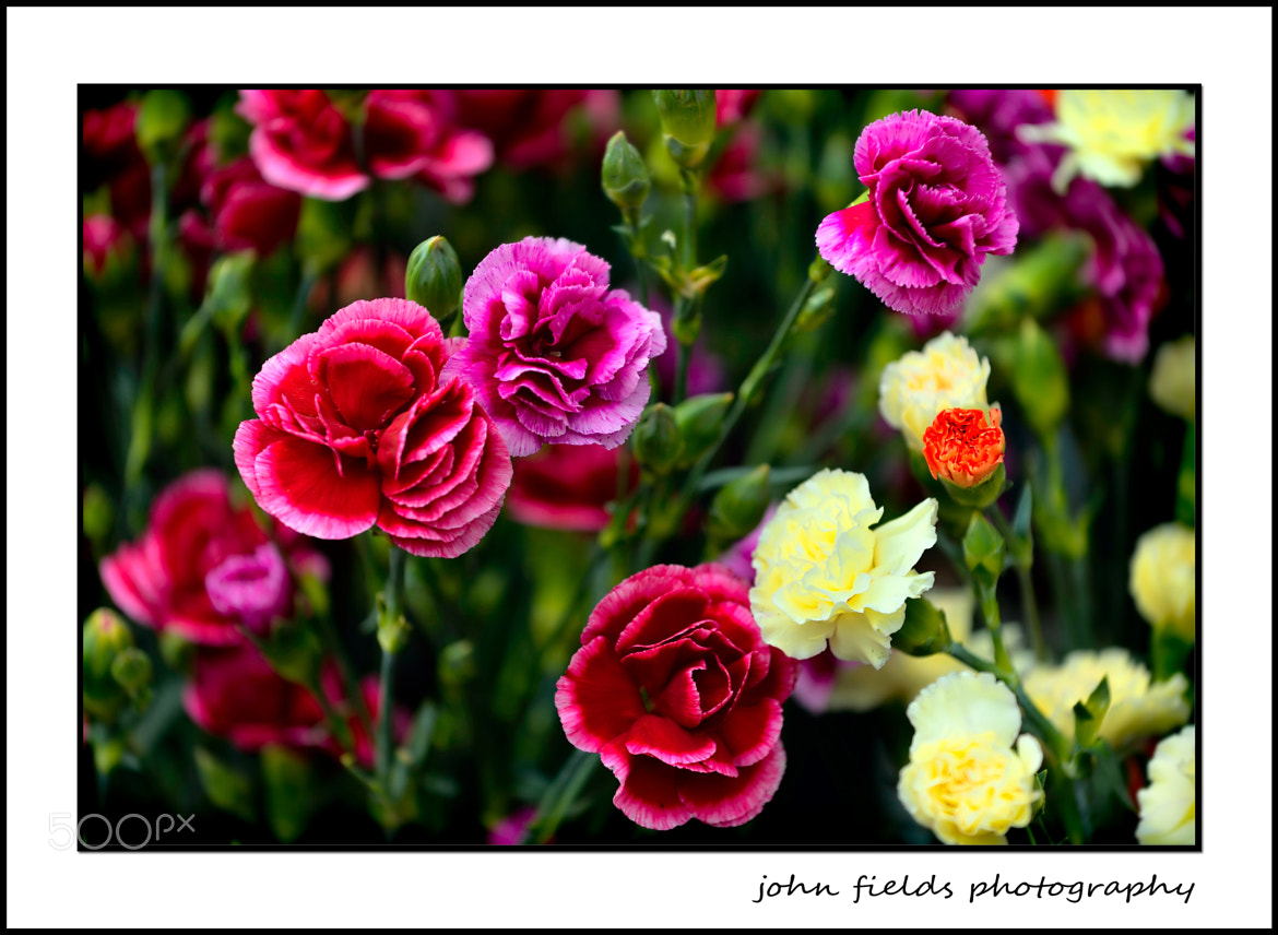 Photograph Mixed flowers by John  Fields on 500px