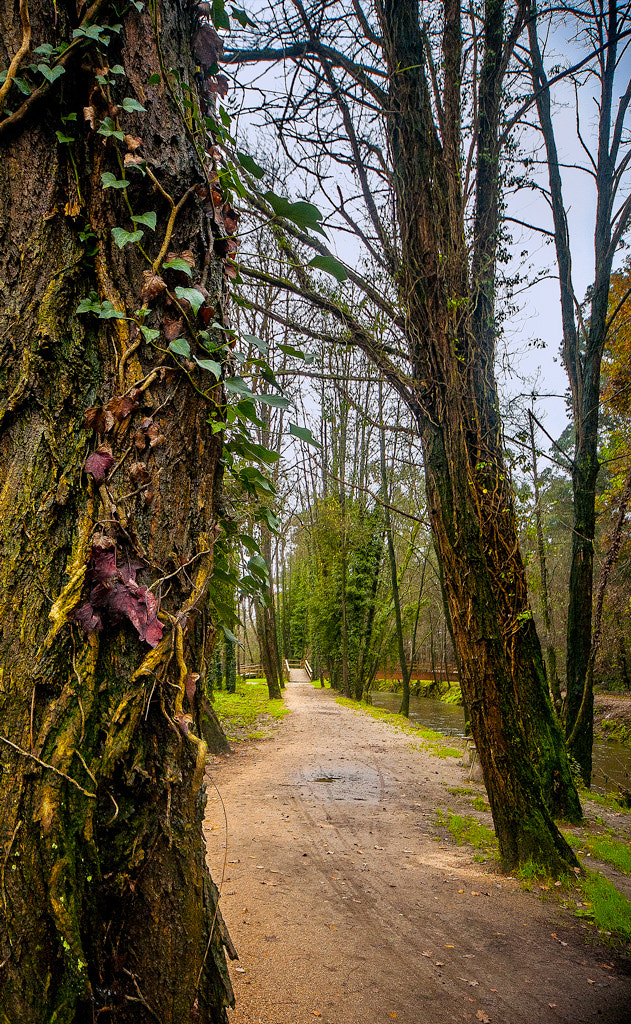 Photograph Park in Porriño-Spain by Living Picture  on 500px