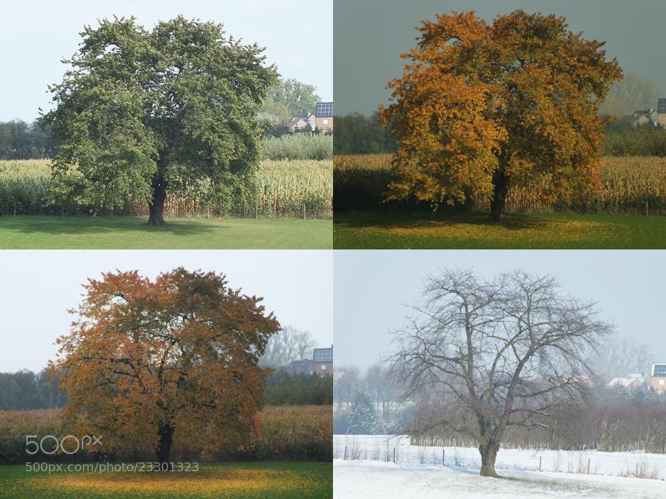 Photograph Tree from summer to winter by Branko Minnart on 500px