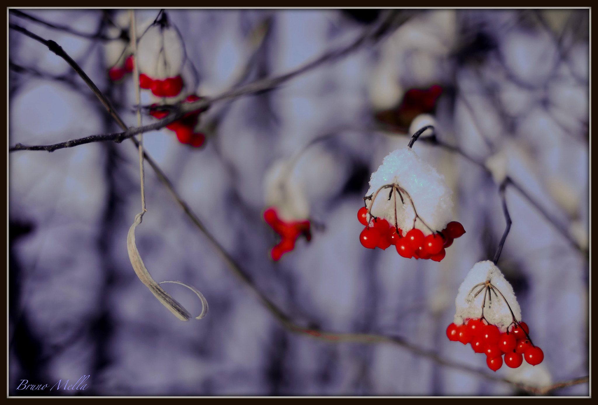 Photograph Redcurrants on the rocks by Bruno  Mella on 500px