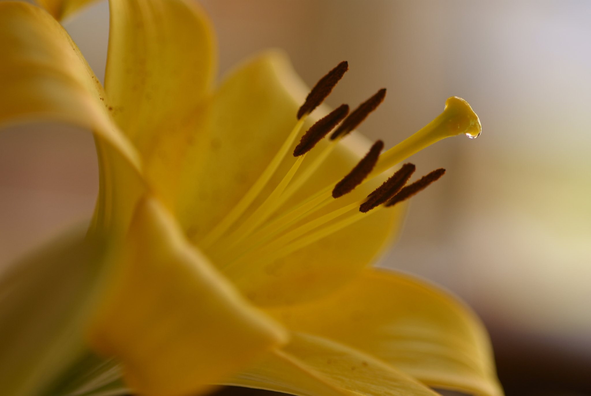 Photograph Lily mystique by Lillian Arnold on 500px