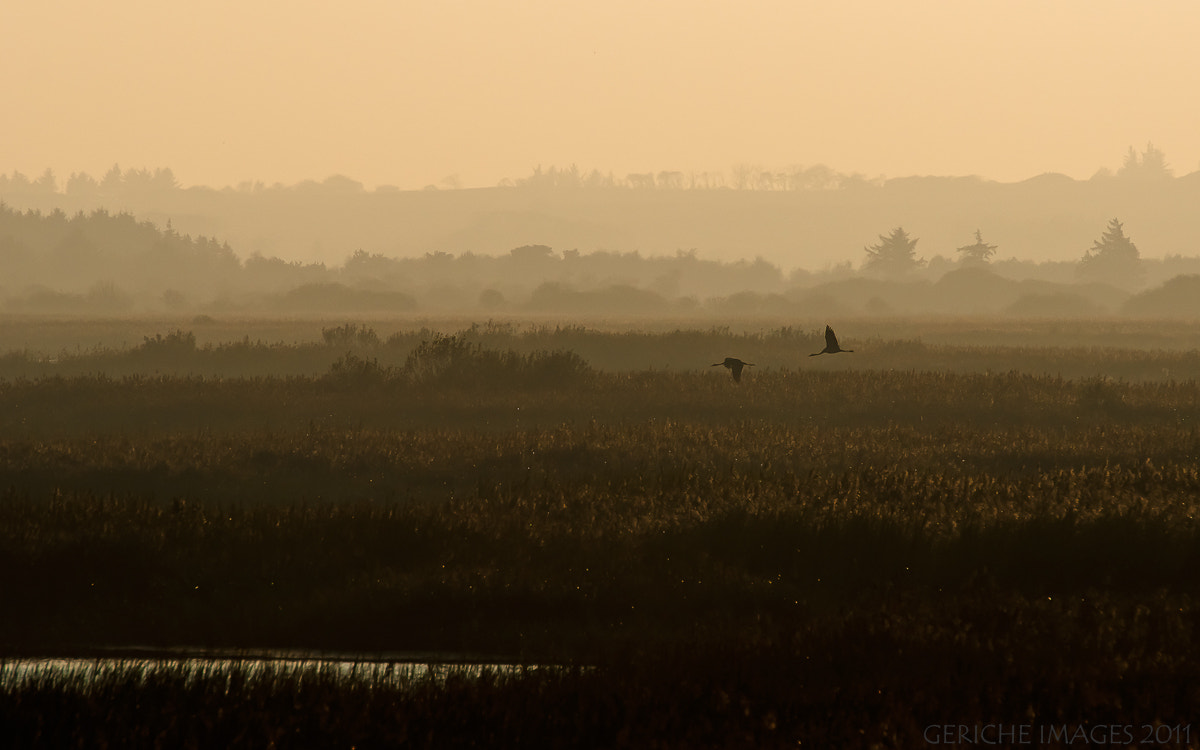 Photograph Cranes at dusk by Geriche  Images on 500px