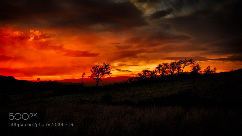 Photograph A Welsh Savanna Sunset by Mark Illsley on 500px