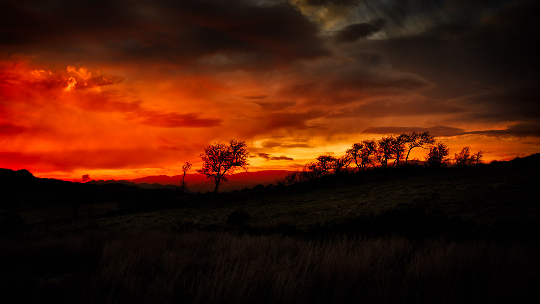 Photograph A Welsh Savanna Sunset by Mark Illsley on 500px
