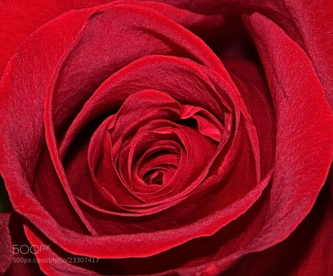 Photograph Beautiful Red by Ann Weis on 500px