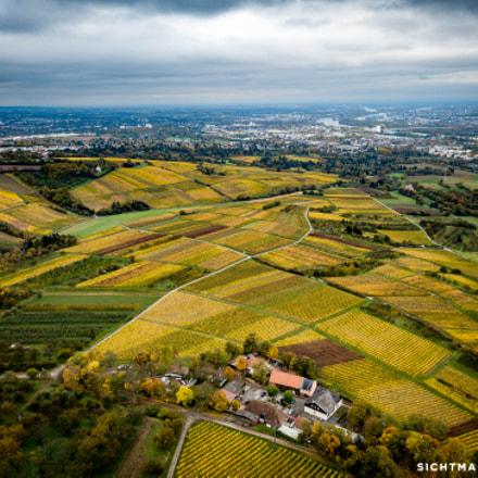 Blick aus dem Rheingau auf Wiesbaden und Mainz