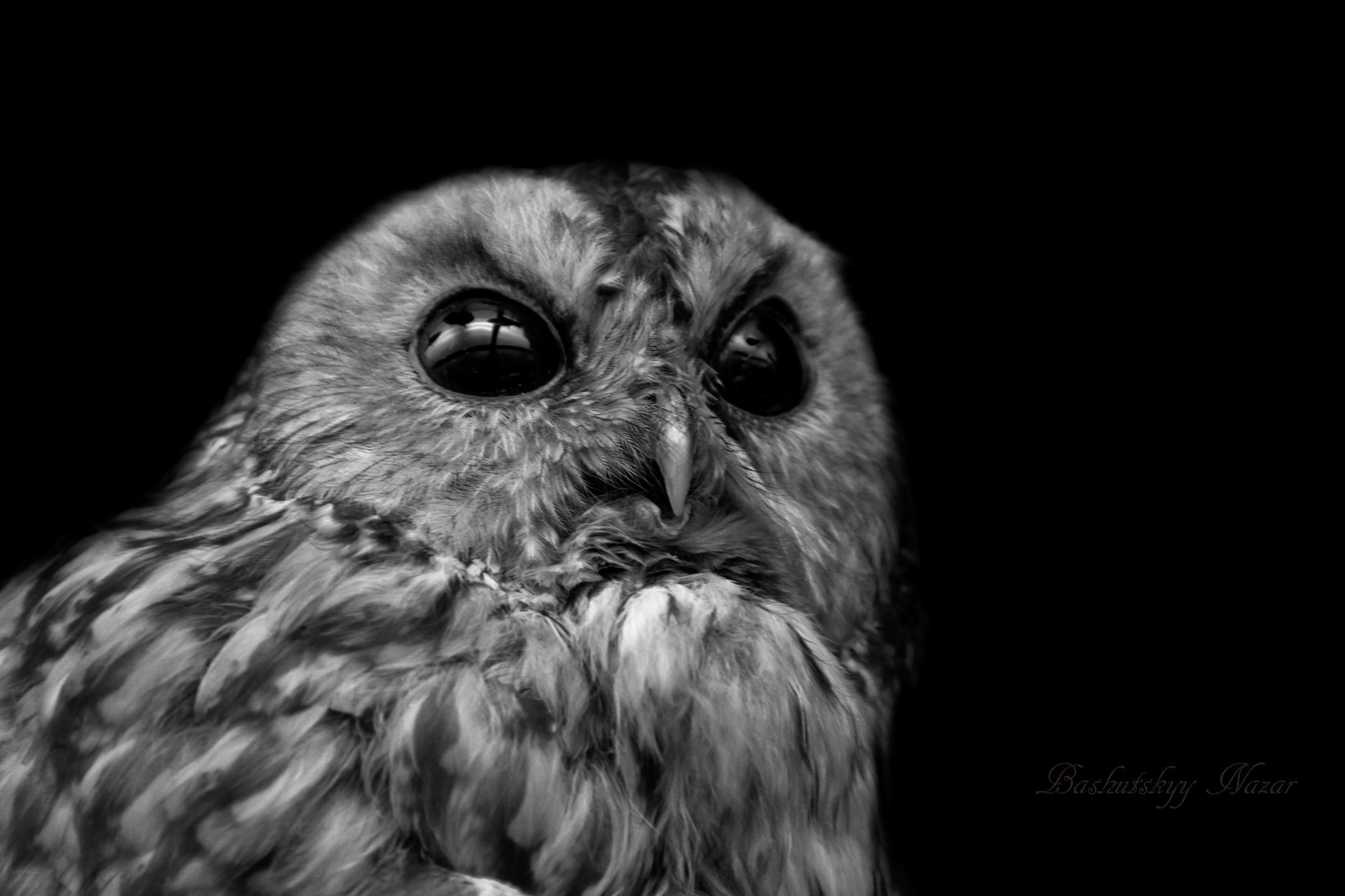 Photograph OWL by Nazar Bashutskyy on 500px