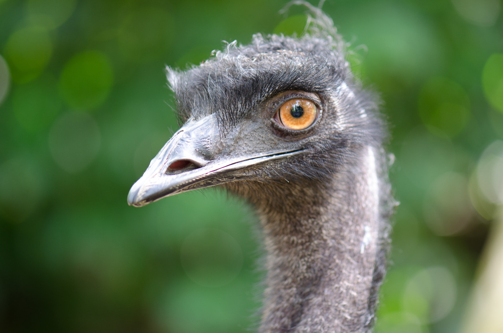 Photograph emu by Kok Leong Lee on 500px