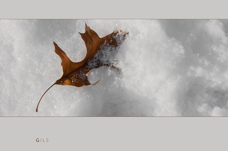 Photograph o-n-ice by Gilbert Claes on 500px