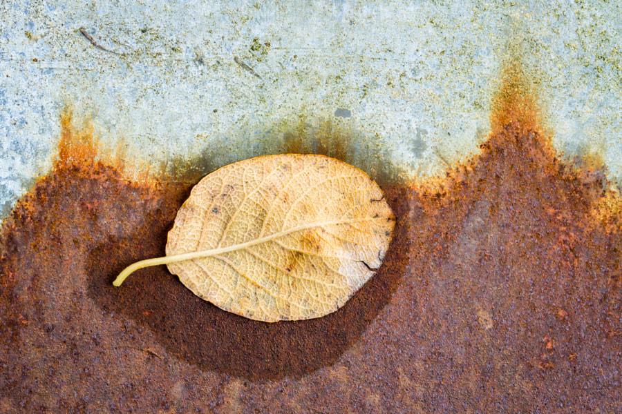 Leaf on rust