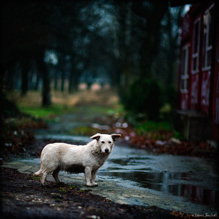 """Photograph From the series """"Dog's Life"""" by Denis Buchel on 500px"""