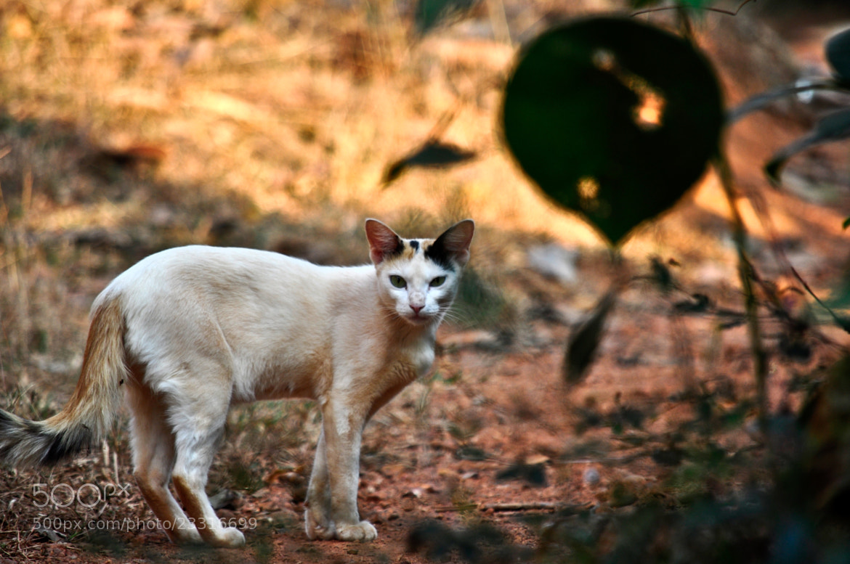Photograph Curious Cat ! by Chaithanya Holla on 500px