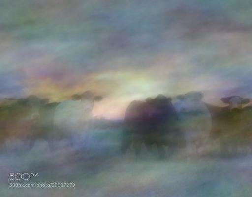 Photograph cows#clouds by samu8000 on 500px