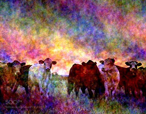 Photograph cows#bar25 by samu8000 on 500px