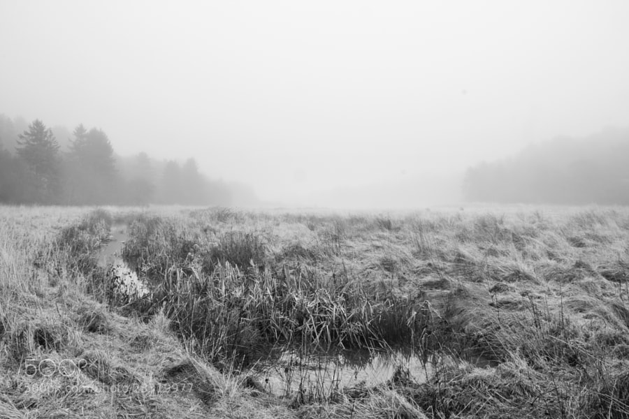 Fog on the field by Kristoffer  (fotokoffe)) on 500px.com