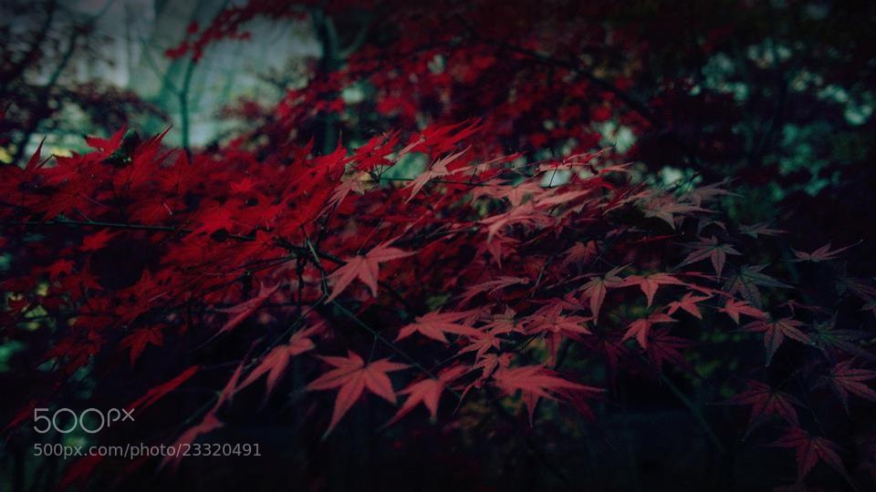 Photograph Red by imonster on 500px