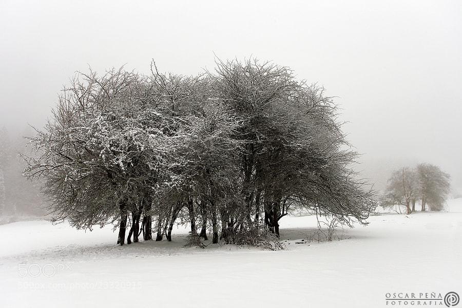 Photograph - Calma de cristal - by Oscar  Peña on 500px