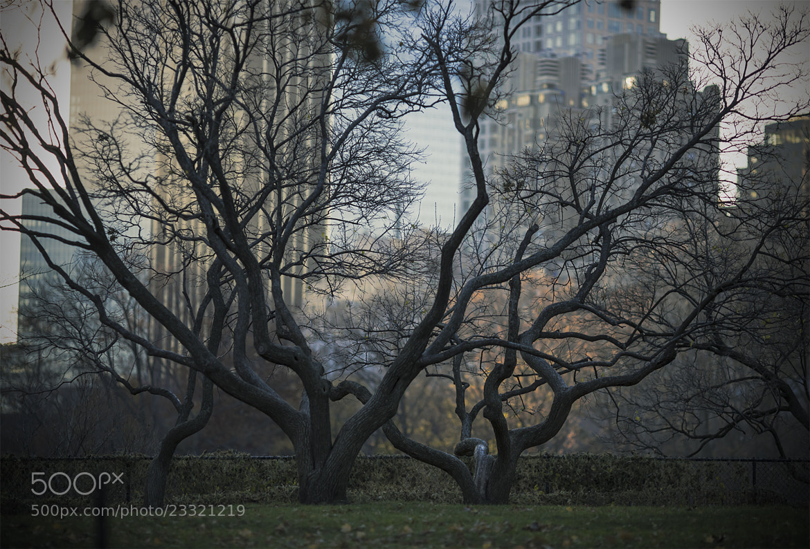 Photograph Central Park by laura  malucchi on 500px
