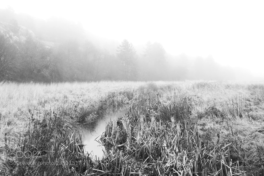 In a mystic fog I fumbles by Kristoffer  (fotokoffe)) on 500px.com