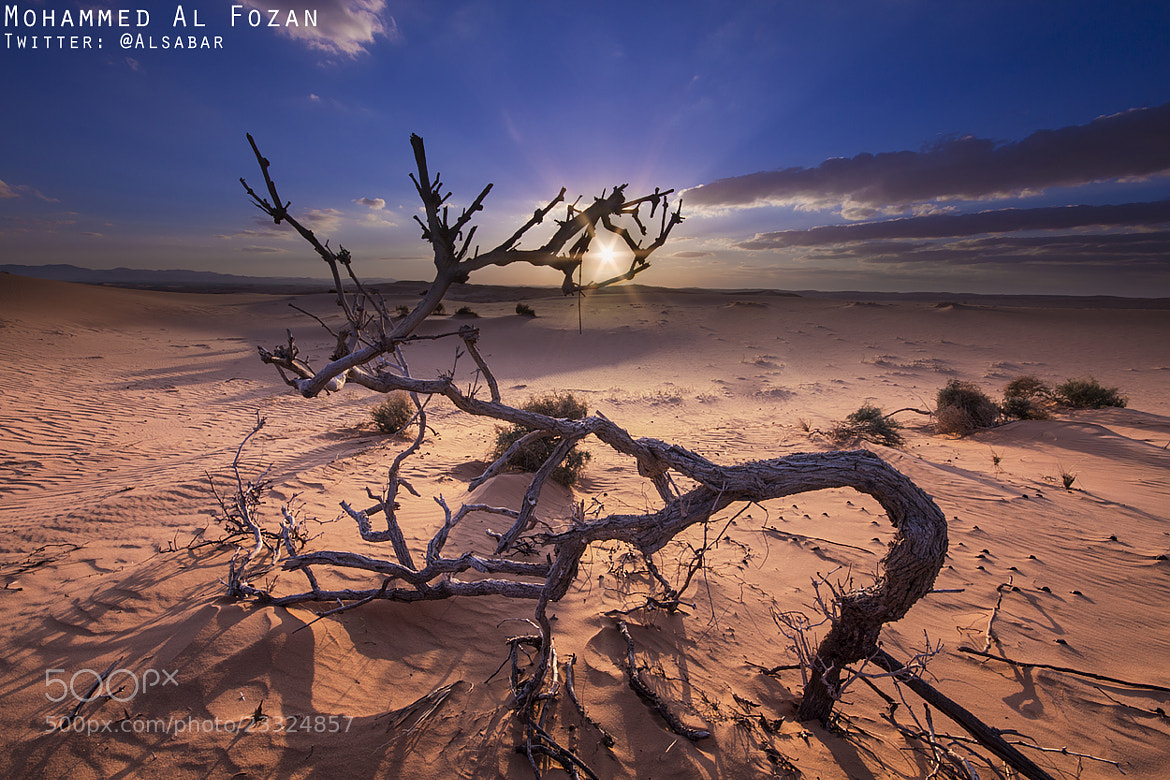 Photograph Desert With Sunset by Mohammed Al-Fozan on 500px