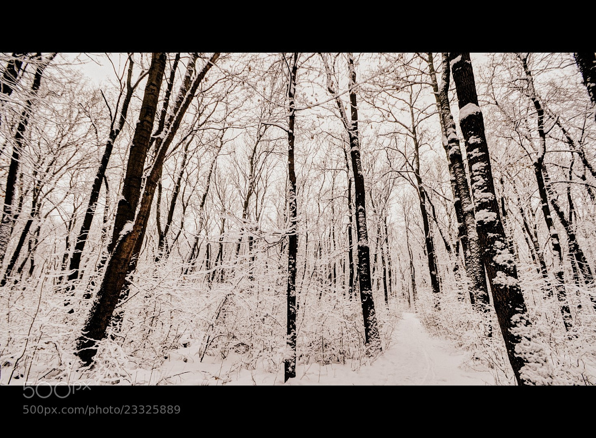 Photograph Winter by Claudia Gadea on 500px
