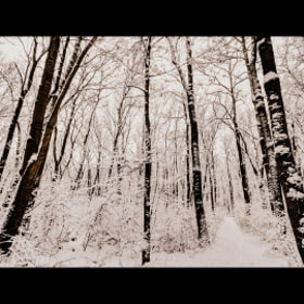 Winter by Claudia Gadea (gadeaclaudia)) on 500px.com