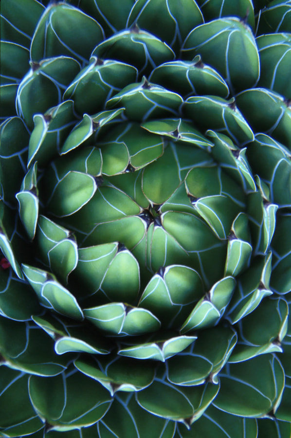 Succulent from the Monaco Arboretum by Travis Ball on 500px.com