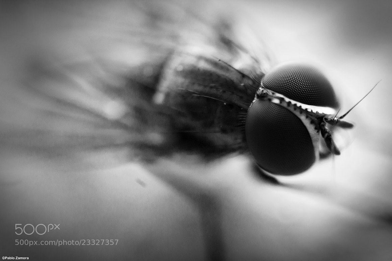 Photograph Fly by Pablo Zamora on 500px