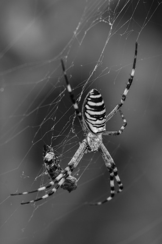 Photograph Spider by sander chauvel on 500px