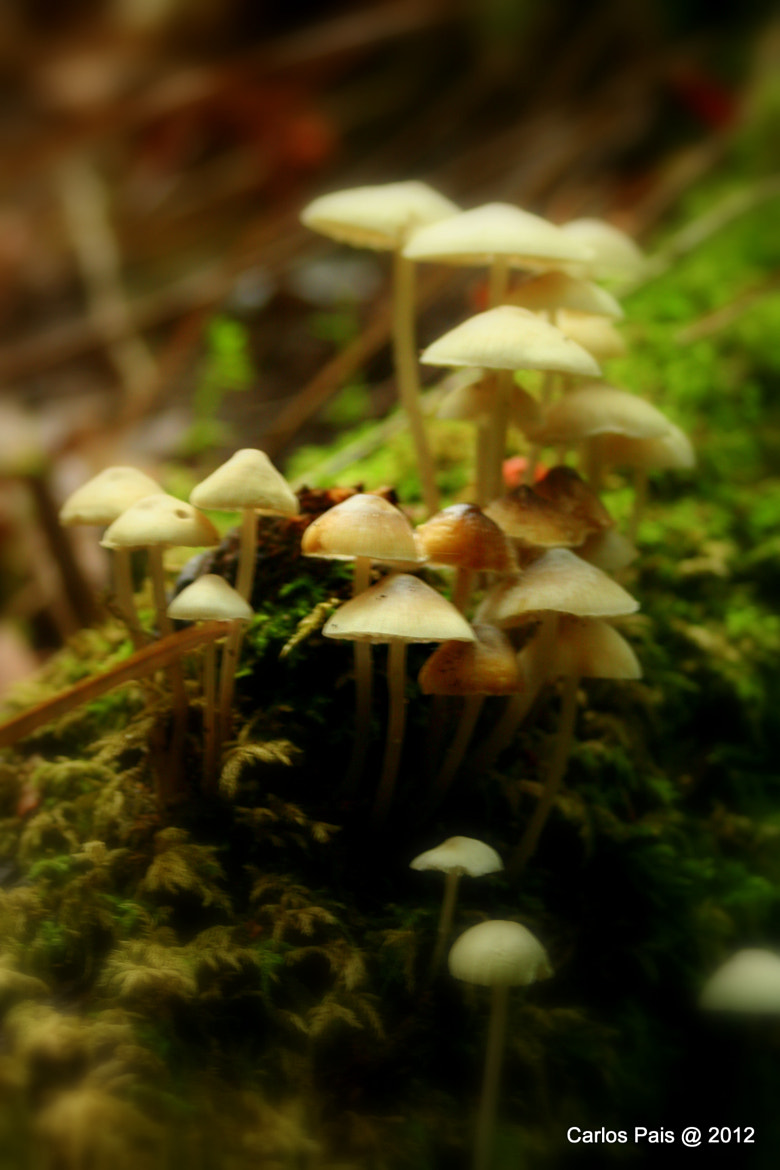 Photograph Soft mushrooms by Carlos Pais on 500px
