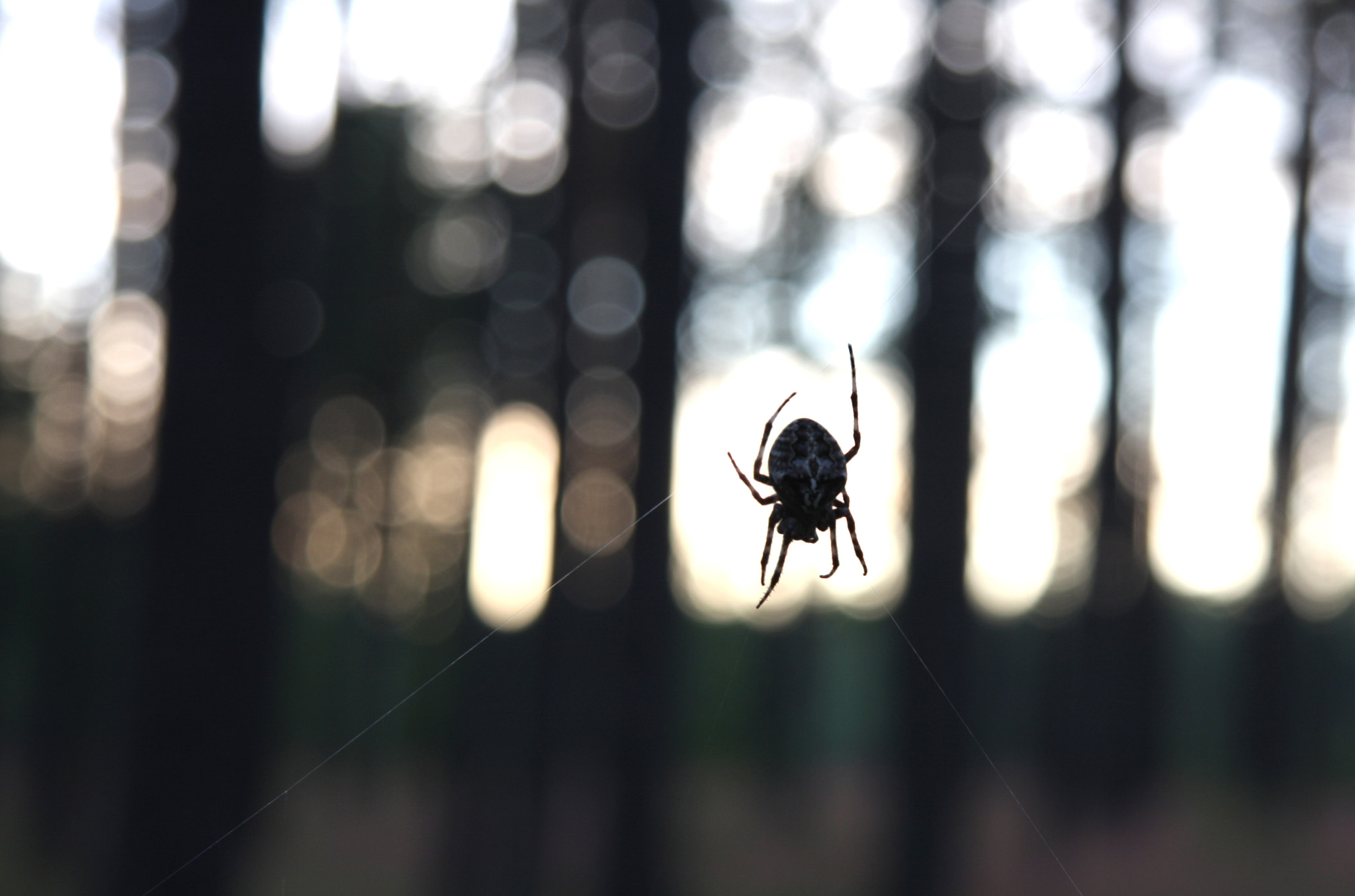 Photograph Spider by andris rubins on 500px