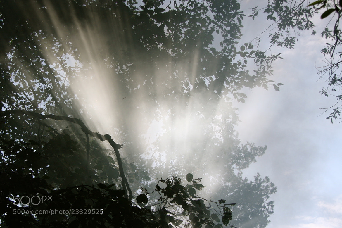 Photograph Rays by andris rubins on 500px