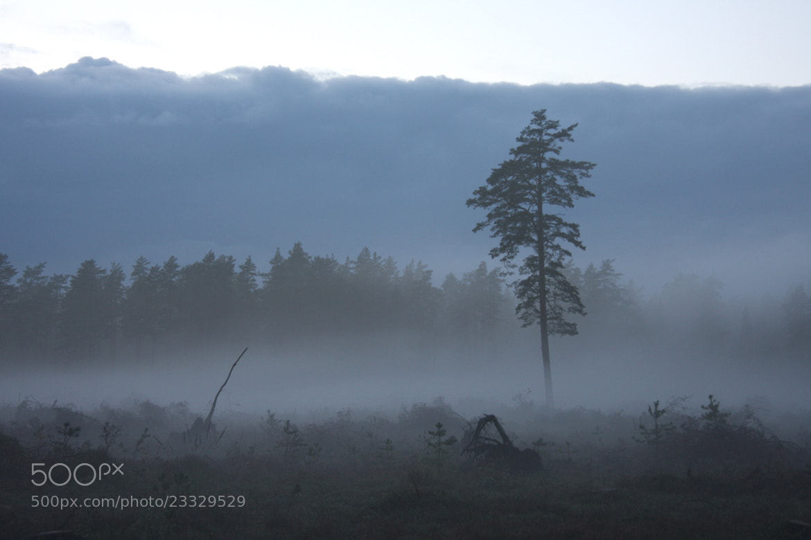 Photograph Fog by andris rubins on 500px