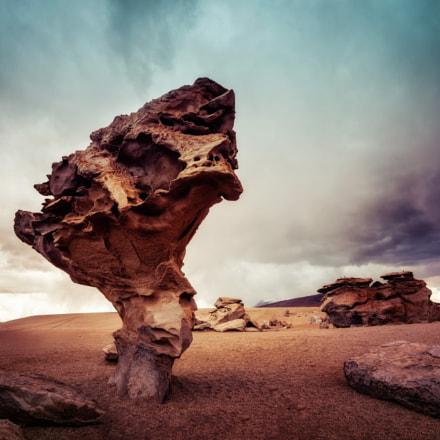 Arbol Bolivia Stone Tree Rock