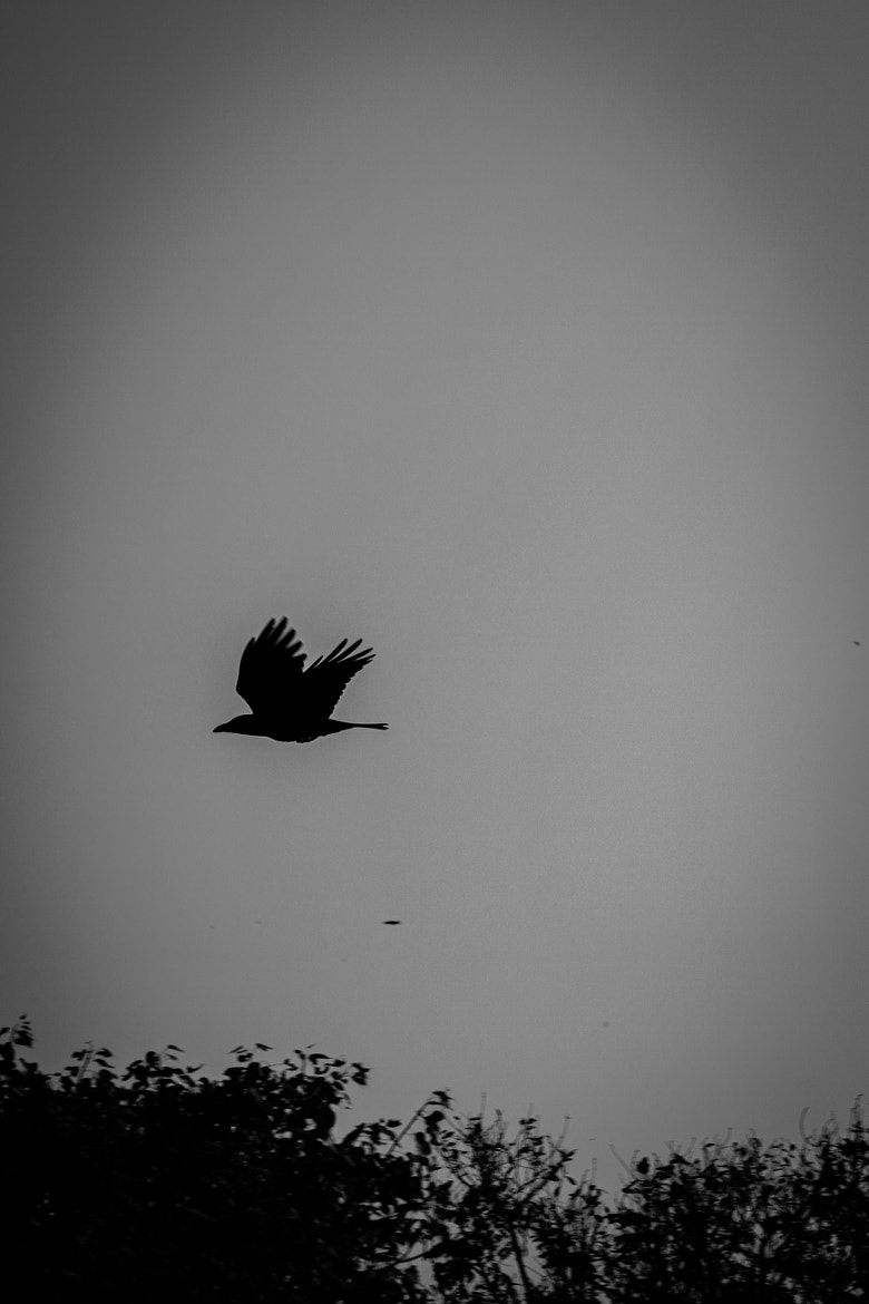 Photograph Fly by saurik s shah on 500px