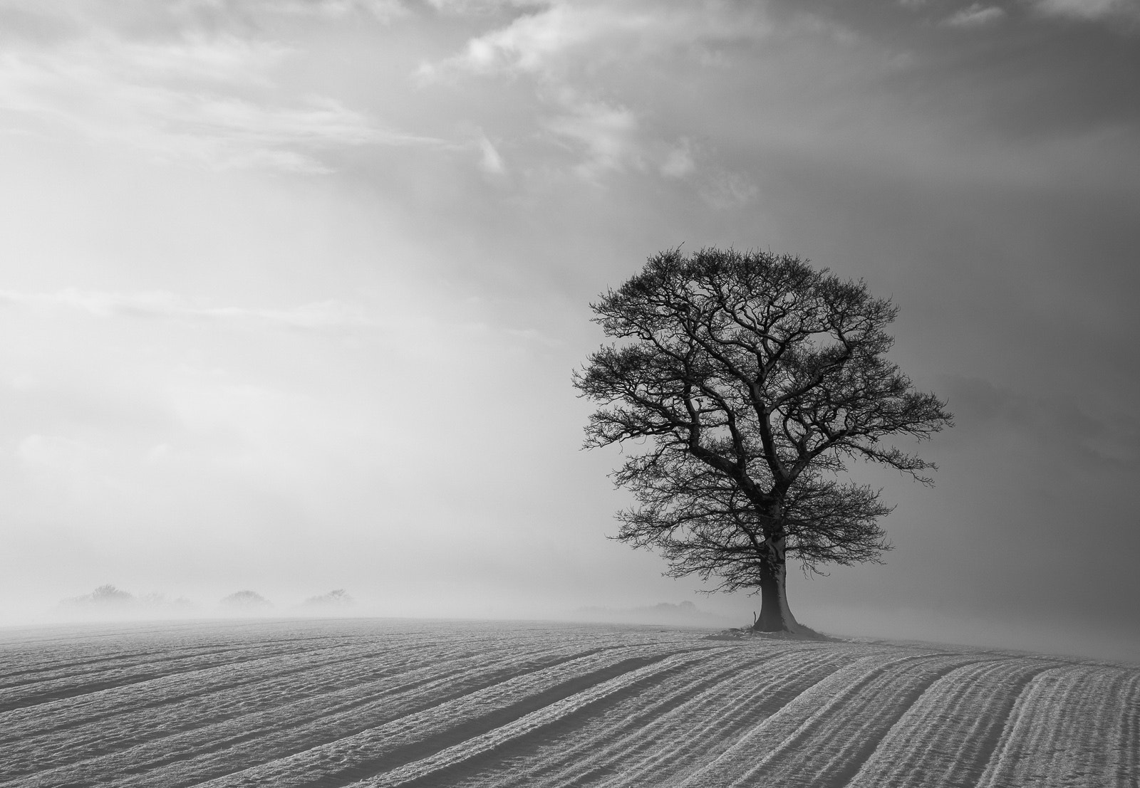 Photograph Hanworth Tree by Rick Bowden on 500px