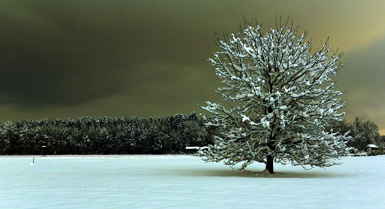Photograph Tree by Azman Miro on 500px