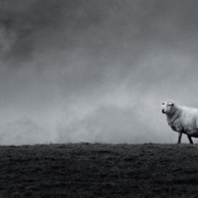 Alone on the hill by Will Delves (WildCardinal)) on 500px.com