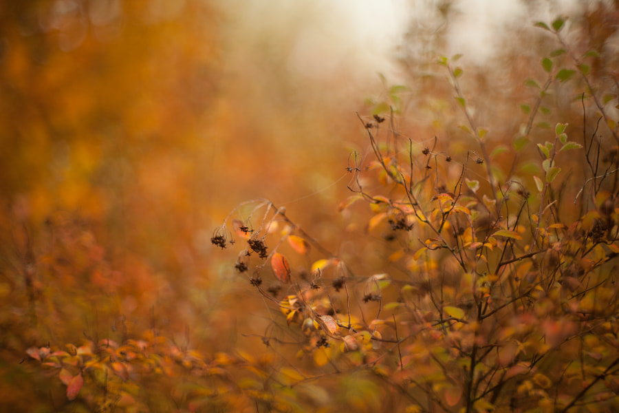 Autumn beech leaves decorate a beautiful nature bokeh background by Max M on 500px.com