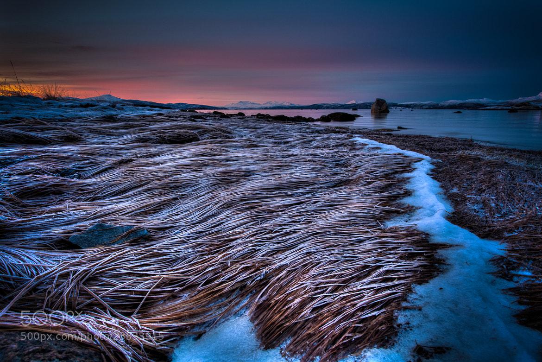 Photograph Frozen by Kristian Pettersen on 500px