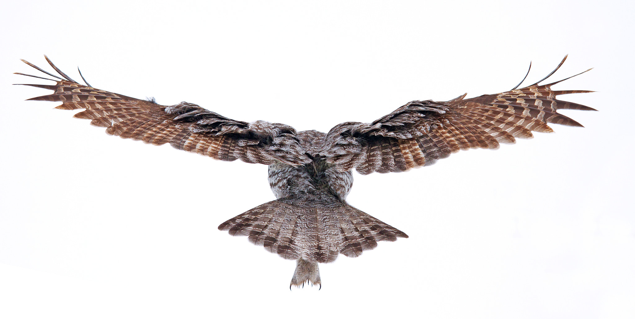 Photograph Wingspan - Great Grey Owl by Jim Cumming on 500px