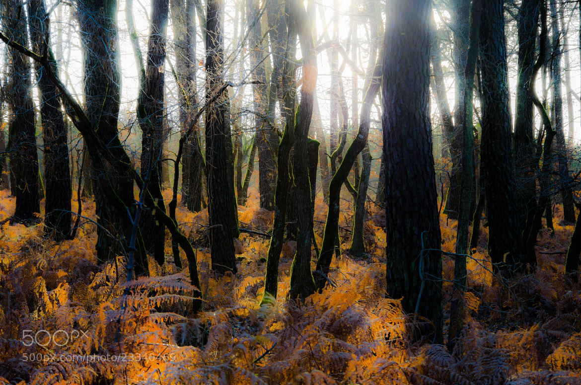 Photograph Rust forest by Pierre  Brinas on 500px