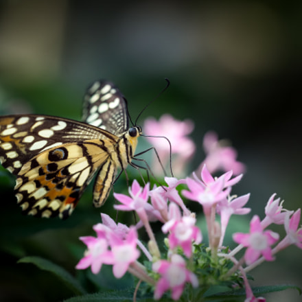Enjoy the nectar