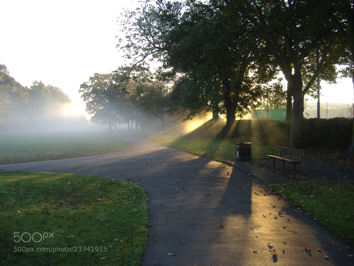 Photograph Early AM Fog in Windsor Park by Gareth Witty on 500px