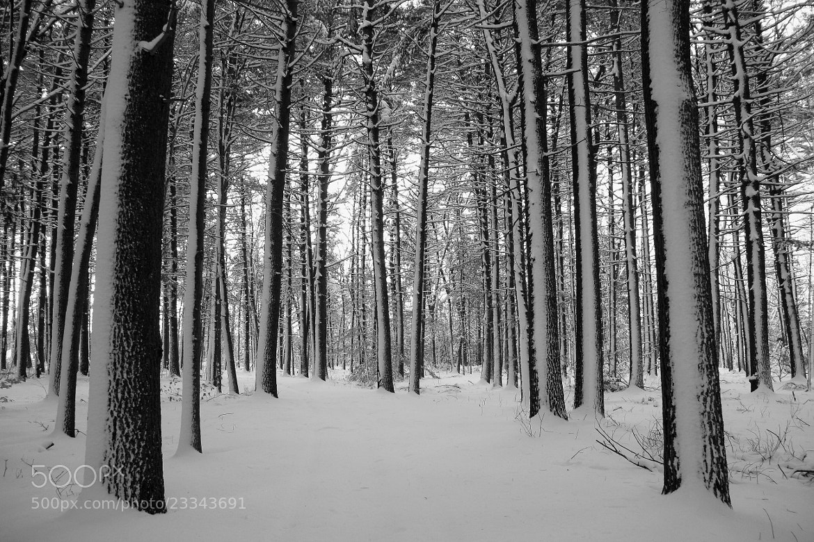 Photograph white out by Andrea Galiffi on 500px