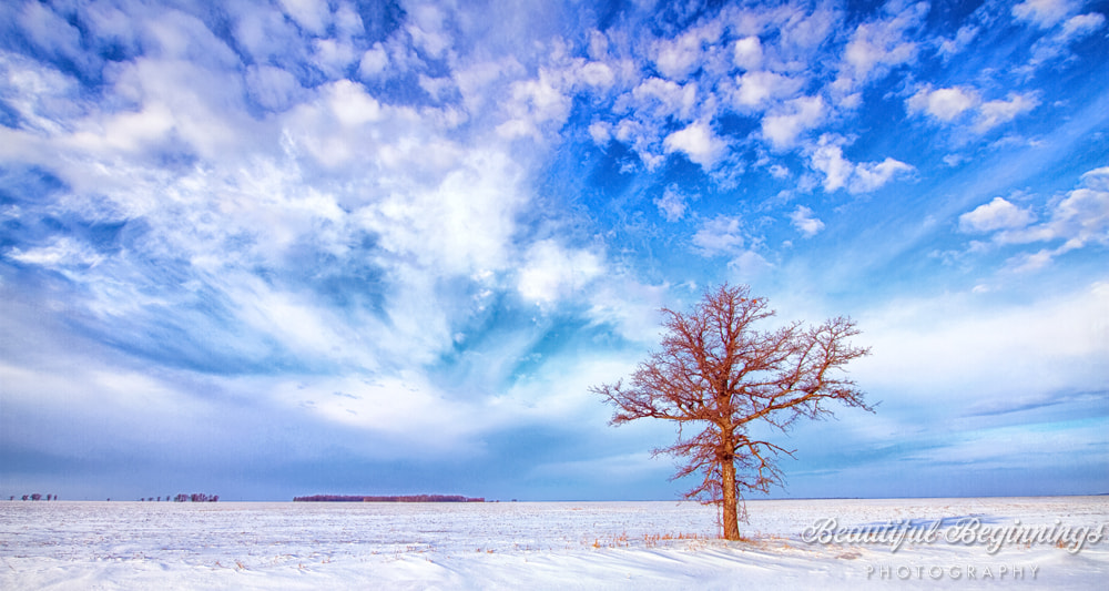 Photograph Standing Alone by Diane Hammerling on 500px