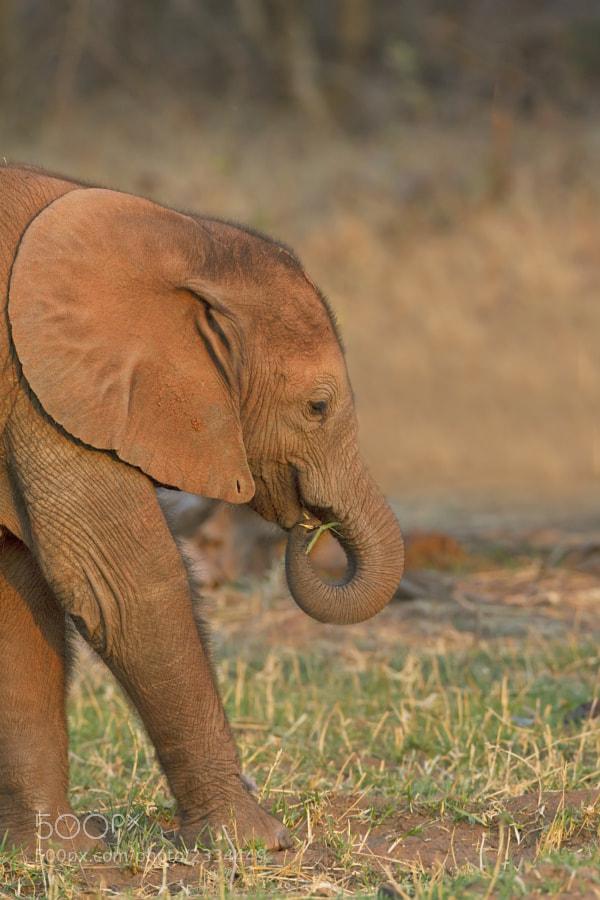 Taken on Rhino Island, Matusadona NP, Zimbabwe, 24th September, 2011
