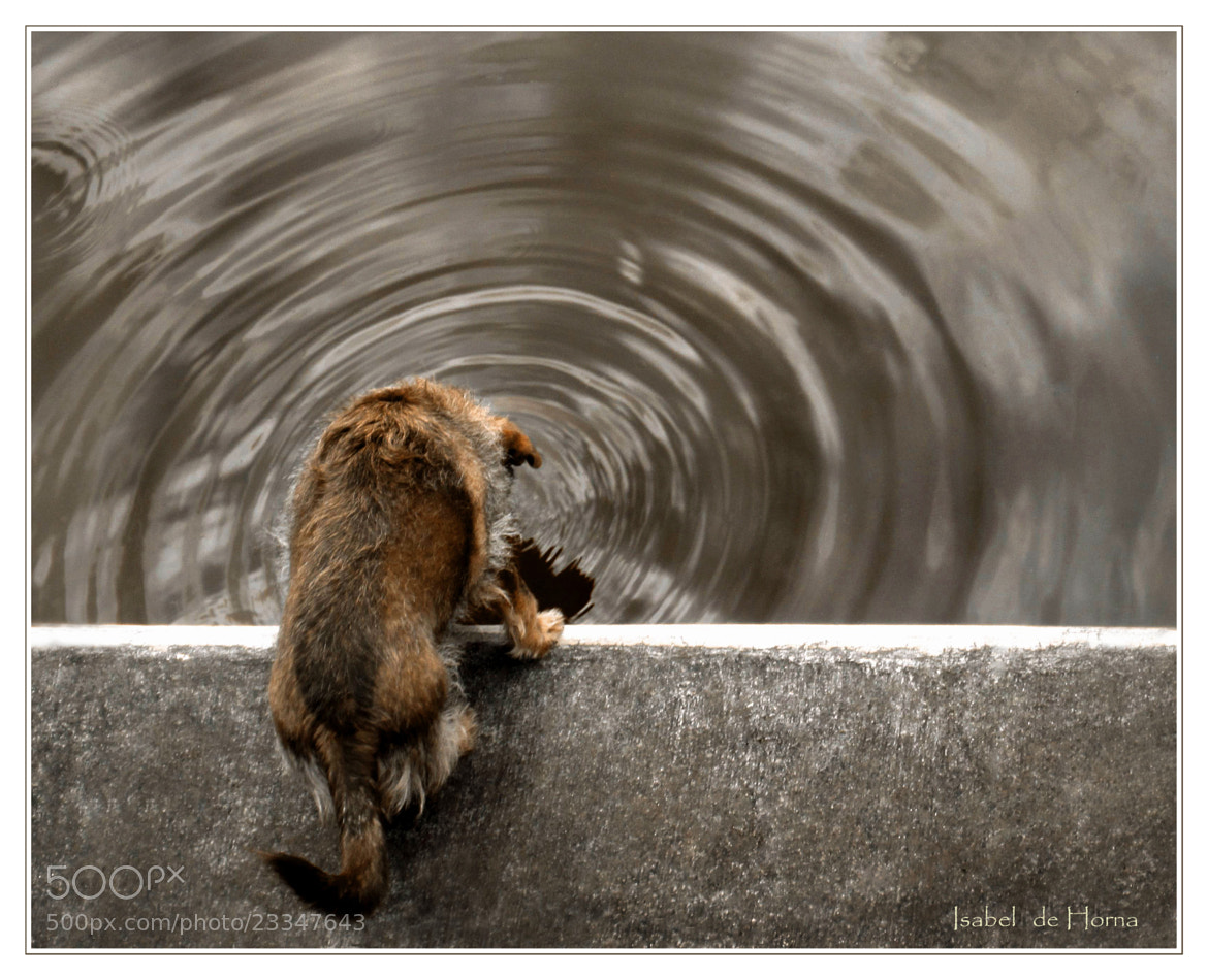 Photograph Thirsty! by Isabel de Horna on 500px