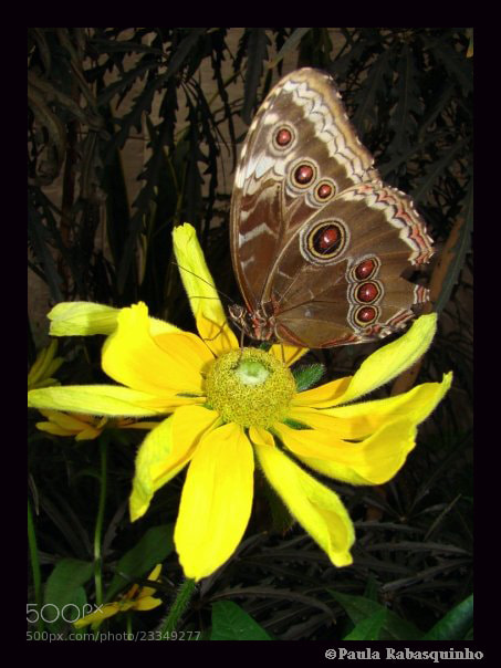 Photograph A butterfully by Paula Rabasquinho on 500px